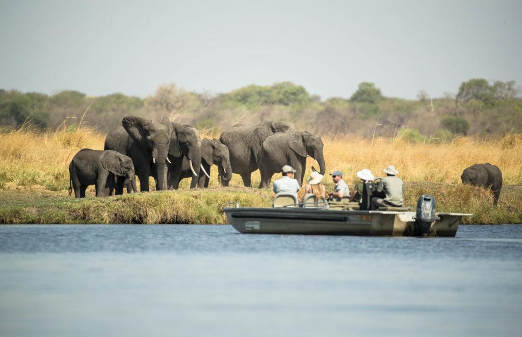 Remarkable safari encounters with Chobe Savanna Lodge on the Chobe River