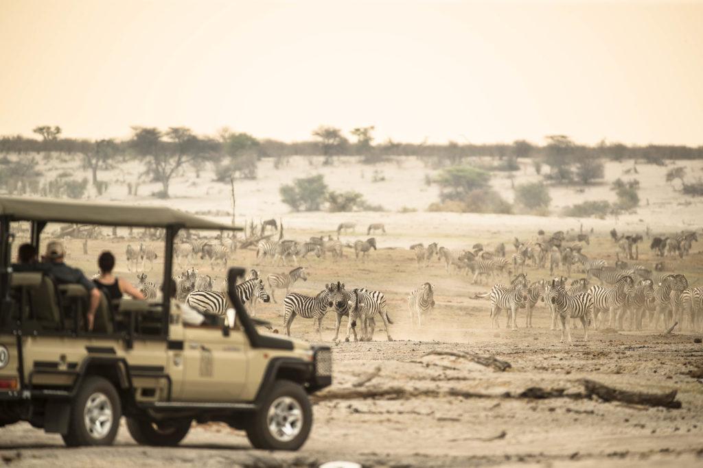 Botswana zebra migration from Leroo La Tau on the Boteti River