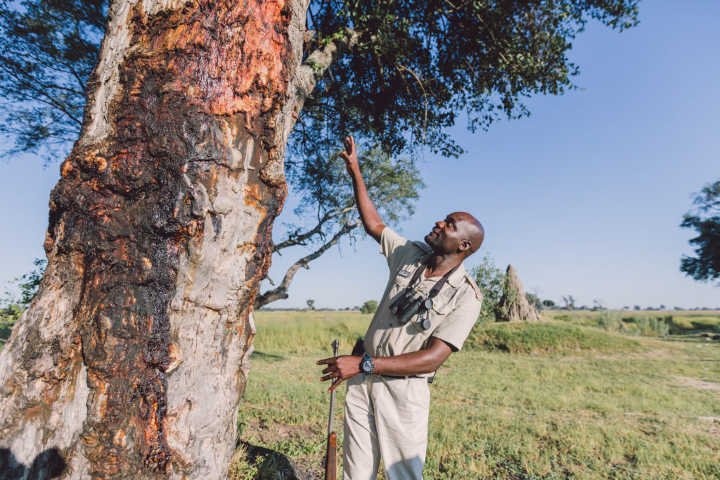 Slade on a guided bush walk in the Okavango Delta from Xugana Island Lodge