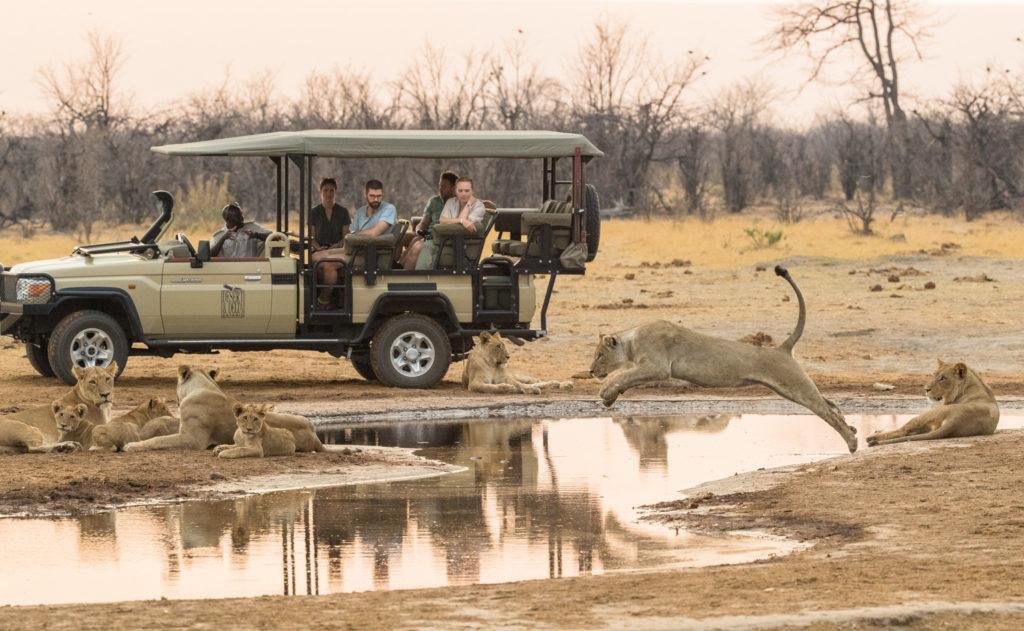On safari with Savute Safari Lodge
