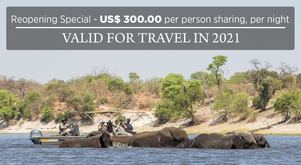 Take advantage of this amazing special for your Chobe Savanna Lodge stay
