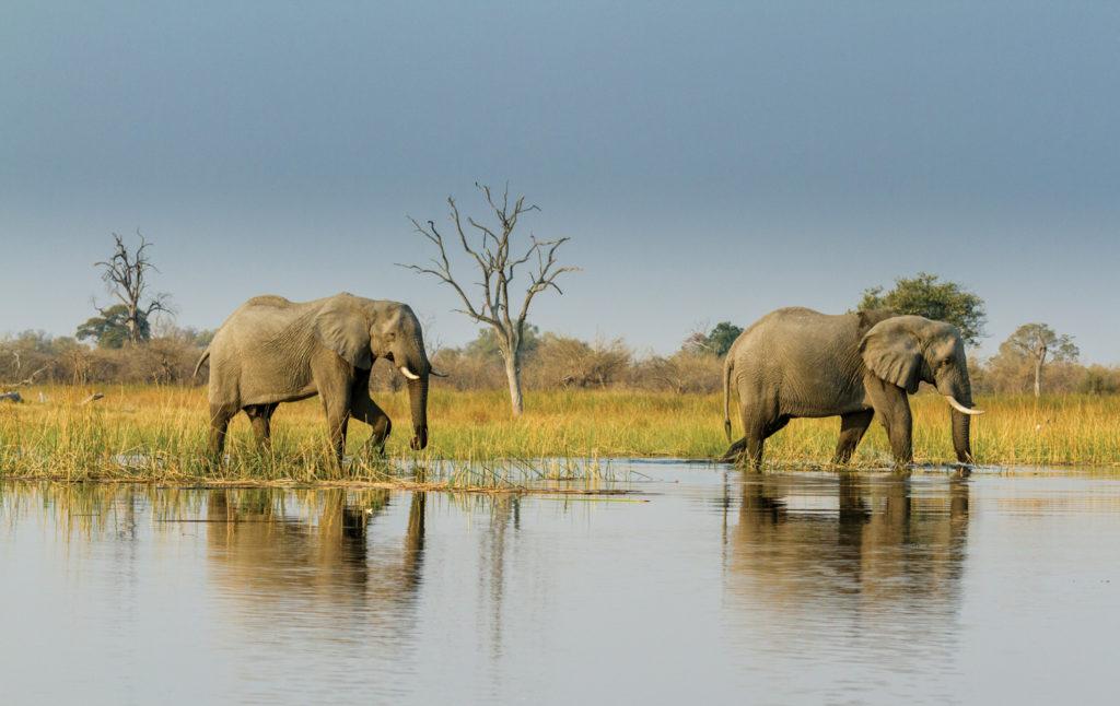 Botswana wildlife safari with Desert & Delta Safaris