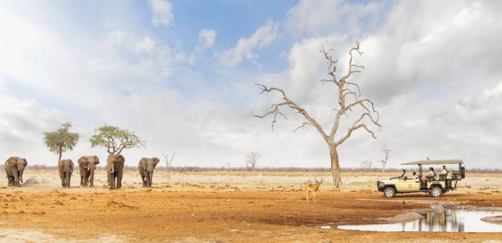 Exceptional wildlife encounters in Botswana for a post-pandemic safari