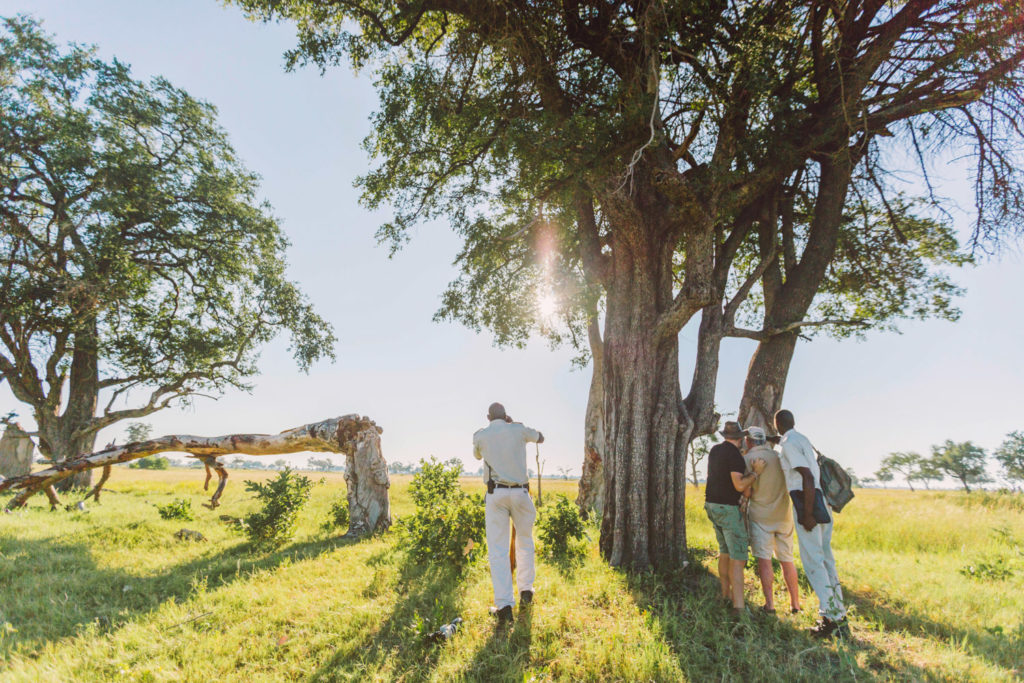 Guided bush walk in the Okavango Delta